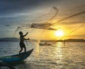 Pêche dans la méditerranée : pourquoi ce qui marche en Adriatique ne marche pas dans le golfe du Lion ?
